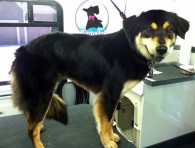 kaia-dog-grooming